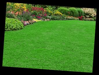 Maxwell Lawn Service
